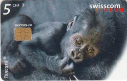 SWITZERLAND - Gorilla, Ybanna at the Zurich Zoo, chip Siemens 35, 06/99, used