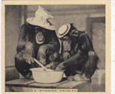 Phillips Cigarette Card Our Favorites No 11 Monkeys Stirring Pot - Phillips / BDV