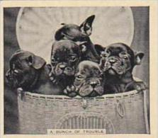 Phillips Cigarette Card Our Favorites No 23 Puppies In A Basket - Phillips / BDV