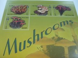 Mongolia-Mushrooms - Champignons