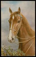 Cheval  Paard - Pferde
