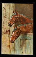 Cheval  Chevaux  Paarden Paard - Pferde