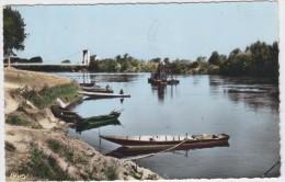 Chalonnes-sur-Loire. Bords De La Loire. - Chalonnes Sur Loire