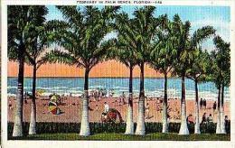 PALM BEACH       81      February In Palm Beach - Palm Beach
