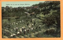 Bolivia Cultivo De La Coca Ne Jungas 1905 Postcard - Bolivië