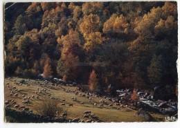 Pastorale D´automne - Moutons Paissant Près Du Ruisseau - écrite Et Timbrée - 2 Scans - Elevage