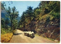 Paisible Rencontre Au Cours D´une Belle Promenade - Bergère Et Moutons Sur La Route - écrite Et Timbrée - 2 Scans - Elevage