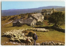 Départ Pour Le Pâturage - Ferme Paysan Moutons - Non écrite - 2 Scans - Fermes
