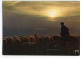 Crépuscule Sur Le Troupeau De Moutons, Berger - écrite Non Timbrée - 2 Scans - Elevage