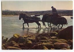 Travail De La Mer En Bretagne - Ramassage Du Goémon - Attelage Cheval - écrite Et Timbrée - 2 Scans - Bretagne
