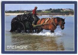 Bretagne - Charretée De Goëmon - Attelage Cheval Algues - écrite Non Timbrée - 2 Scans - Bretagne