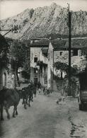 VIALAS - Entrée Du Village - Route Du Pont De Montvert (1954) - France