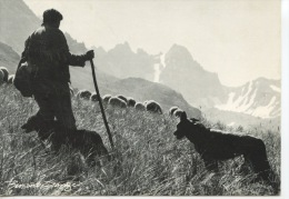 Un Certain Regard -  Bernard Grangé Photographe -  N°911 Expo Photo Valloire - Berger Chien Moutons éleveur - Landbouwers