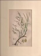 Hand Coloured Circa 1890, 6£. Old Book Page??  (ilustr1) - Sin Clasificación