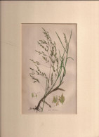 Hand Coloured Circa 1890, 6£. Old Book Page??  (ilustr1) - Documentos Antiguos
