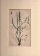 Hand Coloured Circa 1890, 6£. Old Book Page??  (ilustr2) - Sin Clasificación