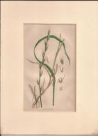 Hand Coloured Circa 1890, 6£. Old Book Page??  (ilustr4) - Documentos Antiguos