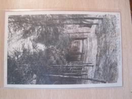 Granges - Sous Bois De La Promenade De Bémont - Granges Sur Vologne
