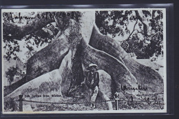 BAHAMAS COTON 1907 - Bahamas