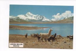 BOLIVIEN  --  CORDILLERA REAL  1982 - Bolivie