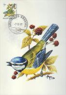 BUZIN / CARTE MAX / COB 2261/ TRACES D´ENCRAGE / VOIR IMAGE - 1985-.. Birds (Buzin)
