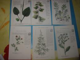 Lot 6 Cpa Les Plantes Utiles - Heilpflanzen