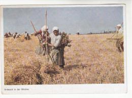 AK Ukraine, Landwirtschaft, Erntezeit In Der Ukraine, Erntebild, Ca. 1942 - Ukraine