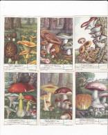 Italia Liebig Cards 1950  Funghi Commestibili Serie - Liebig