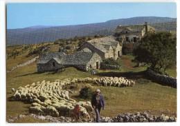 Départ Pour Le Pâturage - Bergerie, Troupeu De Moutons - écrite Et Timbrée - 2 Scans - France