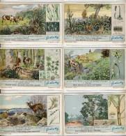Liebig 1937 Sanguinetti N. 1352  Difese Delle Piante (Italia) € 3 - Liebig