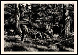 ÄLTERE POSTKARTE SCHREIENDER HIRSCH GEMÄLDE VON FR. REIMANN ZEULENRODA Brunft Roe Deer Cerf Chevreuil Cpa Ansichtskarte - Non Classificati