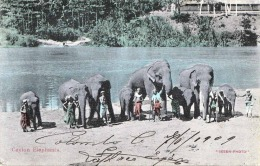 CEYLON ELEPHANTS 1909 - Sehr Schöne Karte Gel., Keine Marke - Sri Lanka (Ceylon)