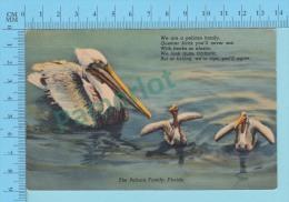 USA Florida ( A Pelican Family ) Linen Postcard CPSM 2 Scans - Oiseaux