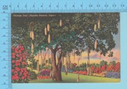 USA Florida ( Kigellia Pinatta ) Linen Postcard CPSM 2 Scans - Fleurs