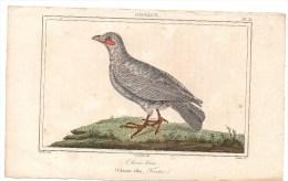 Authentique Gravure De Vauthier 19ème Oiseaux Pl.34 Chionis Blanc (Chionis Alba, Forster) Couché Fils Dir. - Prints & Engravings