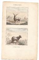 Authentique Gravure 19ème Mammifères La Brebis De Valachie Le Bélier De Tunis - Prints & Engravings