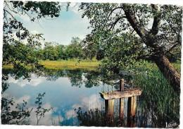 SOLOGNE  (cpsm 45)  L'étang à La Vanne - France