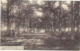 HOOGSTRATEN:  Groote Dreef Der Bauw-hoeve - Hoogstraten