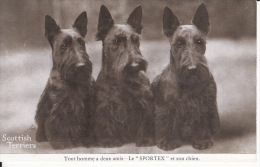 Chiens, Scottish Terrier, 1939, 2 Scans - Cani