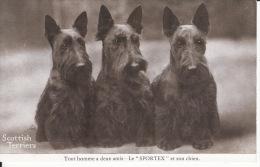 Chiens, Scottish Terrier, 1939, 2 Scans - Chiens