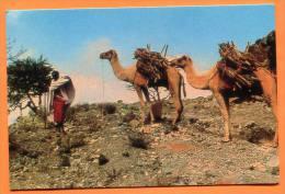 Djibouti - Chamelier ( Kamel Man ) - Gibuti