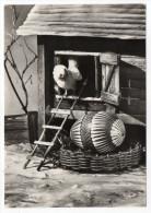 Joyeuses Pâques--1968--Poussins Et Oeuf Décoré Cpsm 15 X 10 Foto D.r Werneréd Léo---carte Glacée-timbre - Pâques