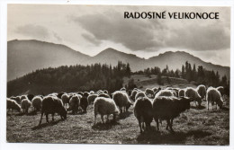 Joyeuses Pâques--Troupeau De Moutons Cpsm 14 X 9 Foto Ladislav Sitensky--carte Glacée-timbre - Pâques