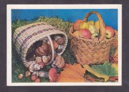Russia. USSR. 1980. Mushrooms And Apples. Postcard. 26.10.79. - Russia