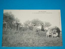 """84 ) Métiers - En Provence - N° 2 - La Cueillette Des Olives - L'instalation """"   - EDIT : Bru - Unclassified"""