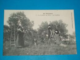 """84 ) Métiers - En Provence - N° 3 - La Cueillette Des Olives - La Cueillette """"   - EDIT : Bru - Unclassified"""