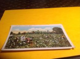 A-Busy-Day-in-a-Cotton-Field, En L état - Etats-Unis