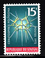 Senegal MNH Scott #377 15fr Ceratospyris Polygona - Sénégal (1960-...)