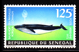 Senegal MNH Scott #C118 125fr Balaenopt Era Physalus Rotqua L Commun - Sénégal (1960-...)