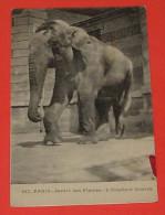 75 - Paris - Jardin Des Plantes - L'éléphant Koutch :::: Portraits - Zoo  ----------- 326 - Elefanten